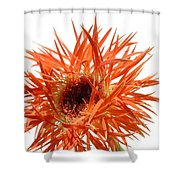 0688c-005 Shower Curtain