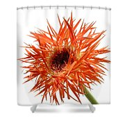 0688c-009 Shower Curtain