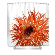 0688c-010 Shower Curtain