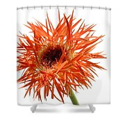 0688c-019 Shower Curtain