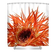 0688c-020 Shower Curtain
