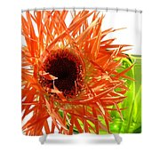 0690c-008 Shower Curtain