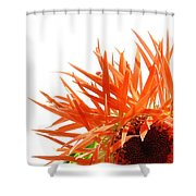 0690c-025 Shower Curtain