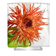 0694c-002 Shower Curtain