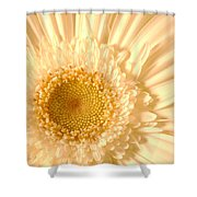 0715c2 Shower Curtain
