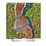 08 Grey Squirrel Sciurus Carolinensis Series Shower Curtain