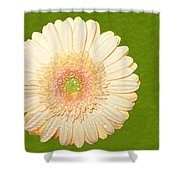 0841a1 Shower Curtain