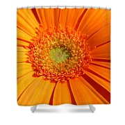 0982-4c Shower Curtain