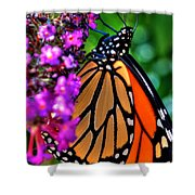 007 Making Things New Via The Butterfly Series Shower Curtain