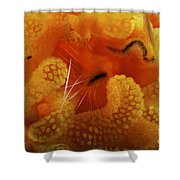 1 Cm Yellow Tube Polyp With A Small Shower Curtain