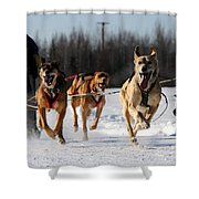 2011 Limited North American Sled Dog Race Shower Curtain