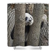 A Baby Panda Plays On A Branch Shower Curtain