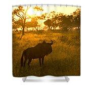 A Backlit Wildebeest Resting Shower Curtain