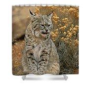 A Bobcat Shower Curtain