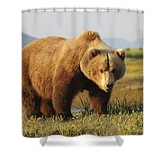 A Brown Grizzly Bear Ursus Arctos Shower Curtain