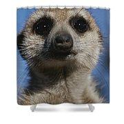 A Close View Of A Meerkat Suricata Shower Curtain