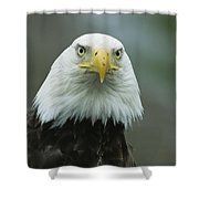 A Close View Of An American Bald Eagle Shower Curtain