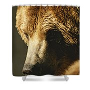 A Close View Of The Face Of A Grizzly Shower Curtain