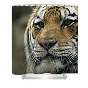 A Close View Of The Face Of Khuntami Shower Curtain