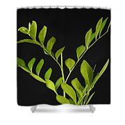 A Coffee Plant Coffea Arabica Shower Curtain