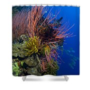 A Colony Of Red Whip Fan Corals Shower Curtain