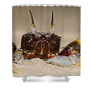 A Crab On The Shore  Shower Curtain