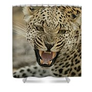 A Female Leopard, Panthera Pardus Shower Curtain