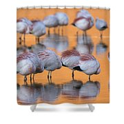 A Flock Of Migratory Flamingos Roost Shower Curtain