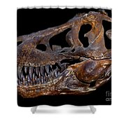 A Genuine Fossilized Skull Of A T. Rex Shower Curtain