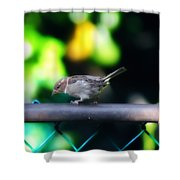 A Little Birdie Told Me Shower Curtain