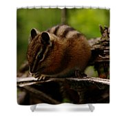 A Little Chipmunk Shower Curtain