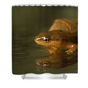 A Striped Newt Notophthalmus Shower Curtain