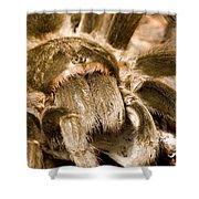 A Tarantula Living In Mangrove Forest Shower Curtain