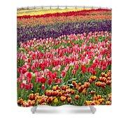 A Tulip Field Shower Curtain