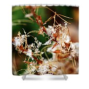 Abstract And Ice Crystals Shower Curtain