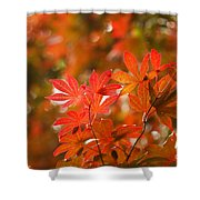 Acer Leaves Shower Curtain
