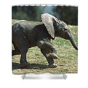 African Elephant Loxodonta Africana Shower Curtain