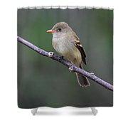 Alder Flycatcher Shower Curtain