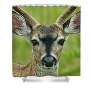 All Ears Shower Curtain