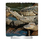 Alligator Pool Party Shower Curtain