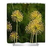 Allium Shower Curtain