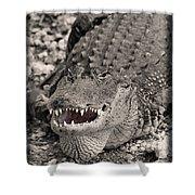 American Alligator Shower Curtain