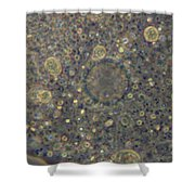 Amoeba Proteus Lm Shower Curtain by M. I. Walker