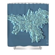 Amoeba Proteus Shower Curtain by M. I. Walker