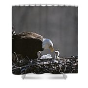 An American Bald Eagle And Chick Shower Curtain