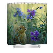 An Attwaters Prairie Chick Surrounded Shower Curtain