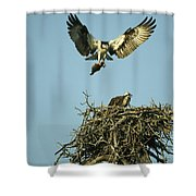 An Osprey Carrying A Fish Back Shower Curtain