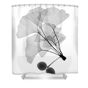 An X-ray Of Ginko Leaves Shower Curtain