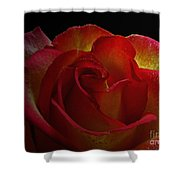 Annaversary Rose I  Shower Curtain