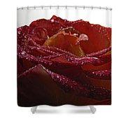 Annaversary Rose II Shower Curtain